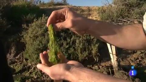 Uno de los ingredientes más cotizados: el alga