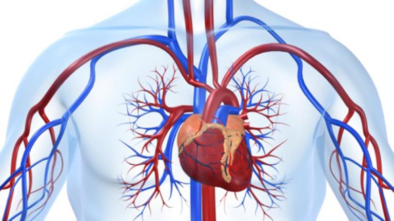 Saber Vivir - Cómo 'desatascar' tus arterias (03/11/11)