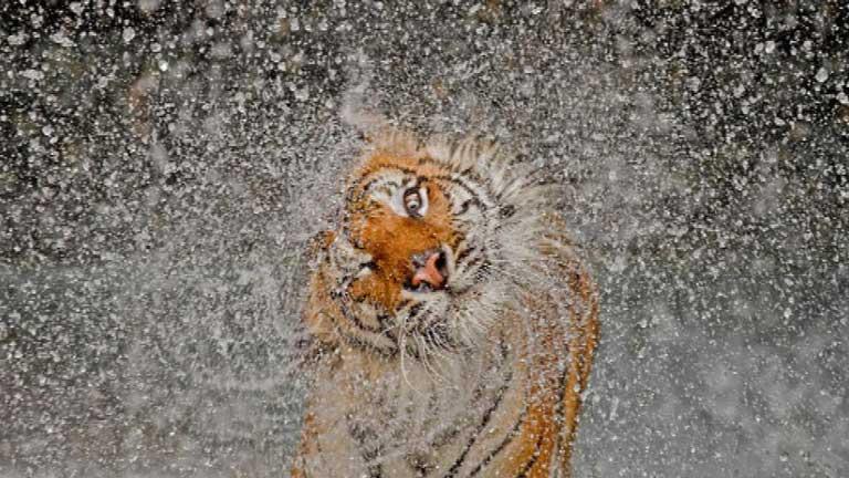 Concurso fotográfico anual National Geographic