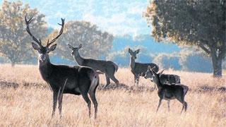 El Congreso aprueba la Ley de Parques Nacionales que permite la caza al menos hasta 2020