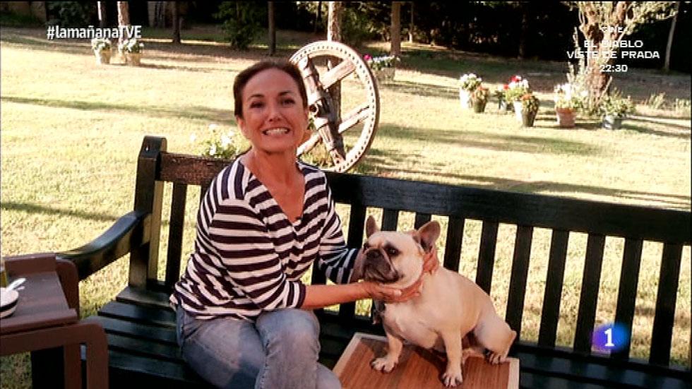 Los Consejos de Maxi - Consejos para cuidar a un bulldog francés