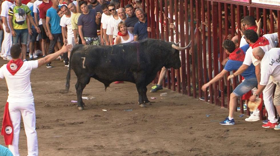 Comando actualidad - Correr, comer, nadar - Un toro polémico