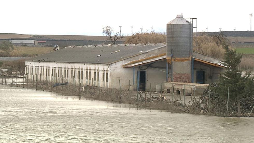 El nivel del agua sigue alto en la Ribera alta del Ebro y preocupan los animales que permanecen aislados