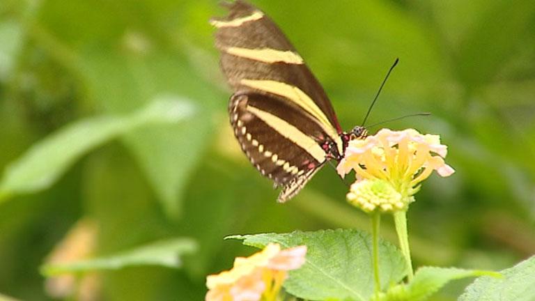 Crían mariposas de hasta 35 especies en el zoo de Santillana del Mar, en Cantabria