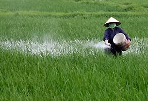 Las instituciones mundiales claman por la crisis alimentaria