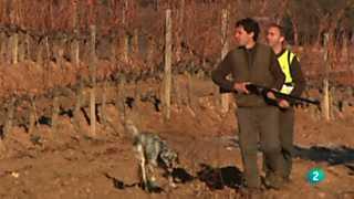 Jara y sedal - Campeonato de España de caza menor con perro