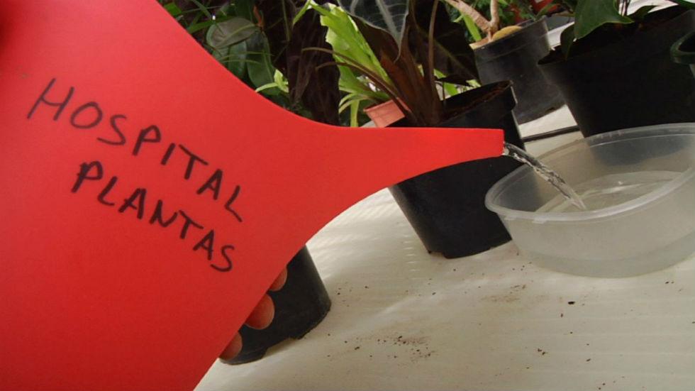 Aquí la tierra - ¡Cuida tus plantas en vacaciones!