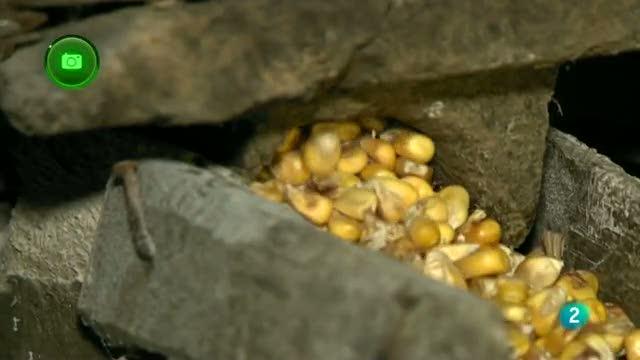 Agrosfera - En clave rural - Degaña