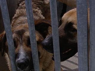 Denuncian maltrato animal en algunas perreras