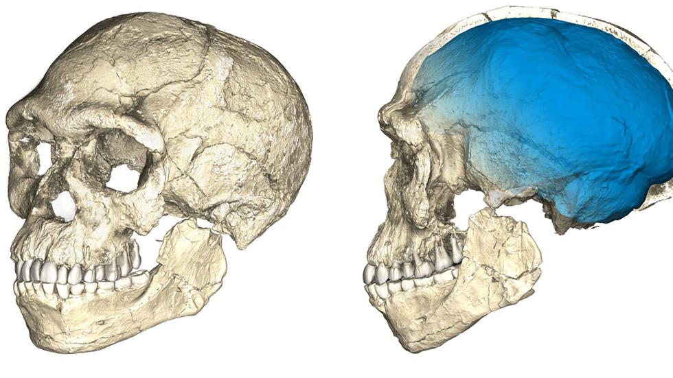 Descubren en Marruecos los fósiles de 'Homo sapiens' más antiguos, con 315.000 años