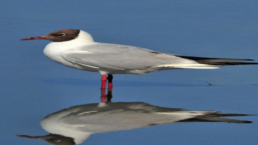 Diez millones de aves mueren cada año en países del Mediterráneo y África