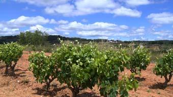 Entre Vinyes - D.O. Terra Alta