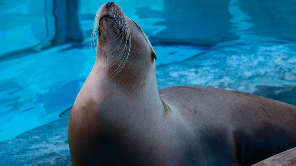 Educar en medio ambiente, clave para cuidar los océanos