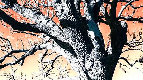EnArbolar: Grandes árboles para la vida