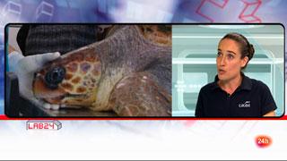 Lab24 - Entrevista a Elsa Jiménez, directora de la Fundación para la Conservación y Recuperación de animales marinos