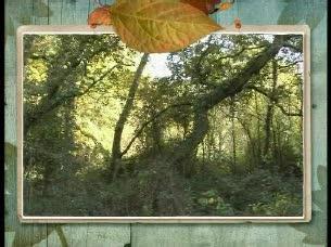 Zoom Net - El espíritu del bosque: Dygra Films