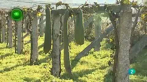 Agrosfera - En primer plano - Esponjas Calabaza