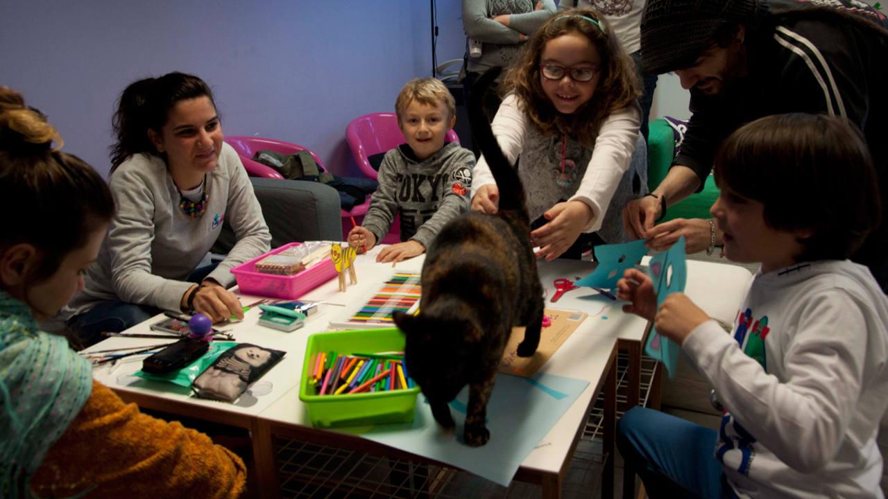 En el establecimiento también se ofrecen terapias con gatos para niños y discapacitados.