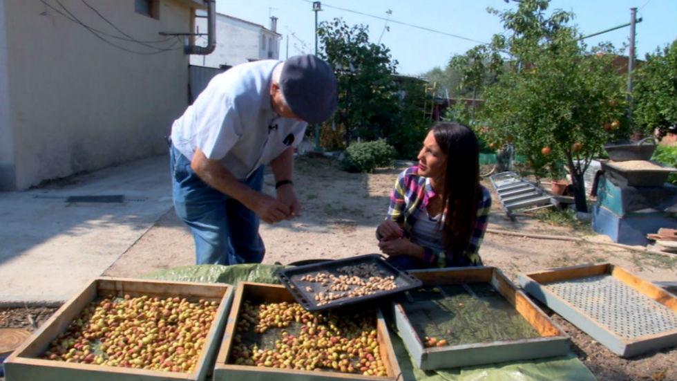 Aquí la tierra - El fruto del pistacho