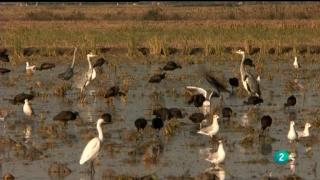 Jara y sedal - Los gansos de Isla Mayor