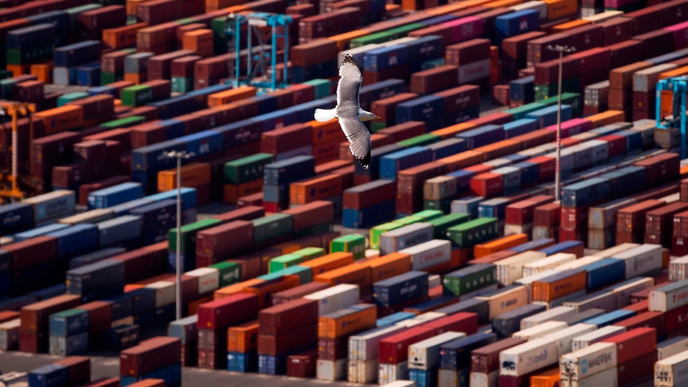 Una gaviota sobrevuela la terminal de contenedores del puerto de Barcelona