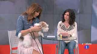 Saber vivir - Un perro te avisa cuando sube o baja la glucosa
