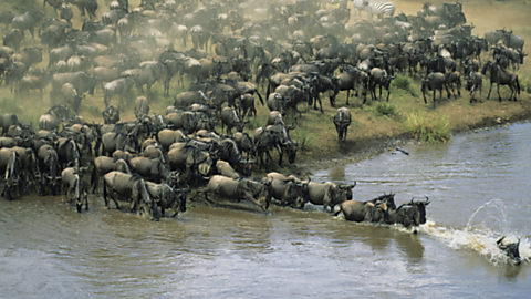 Ben Fogle. La gran migración (4)