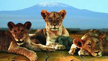 Grandes documentales - Sobrevivir a la sequía. Las leonas del río de Aren