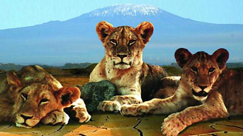 Sobrevivir a la sequía. Las leonas del río de Aren