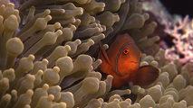 Grandes documentales - La vida en el arrecife (1)