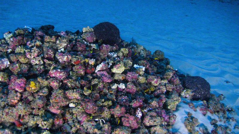 Greenpeace cree que hay algas en el arrecife pese a la poca luz que llega hasta esas profundidades. GREENPEACE