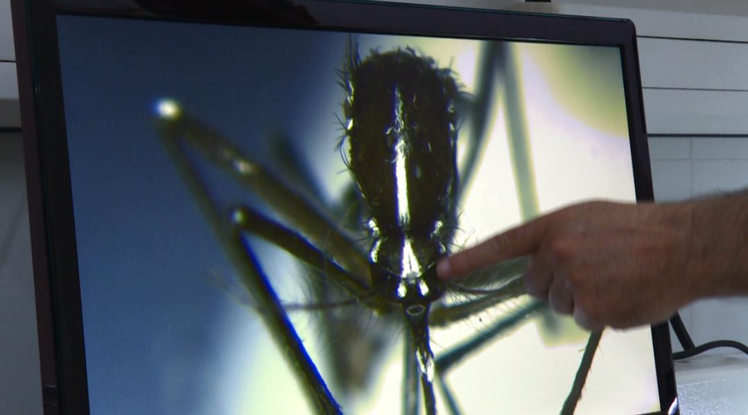 REPOR - Guerra al mosquito