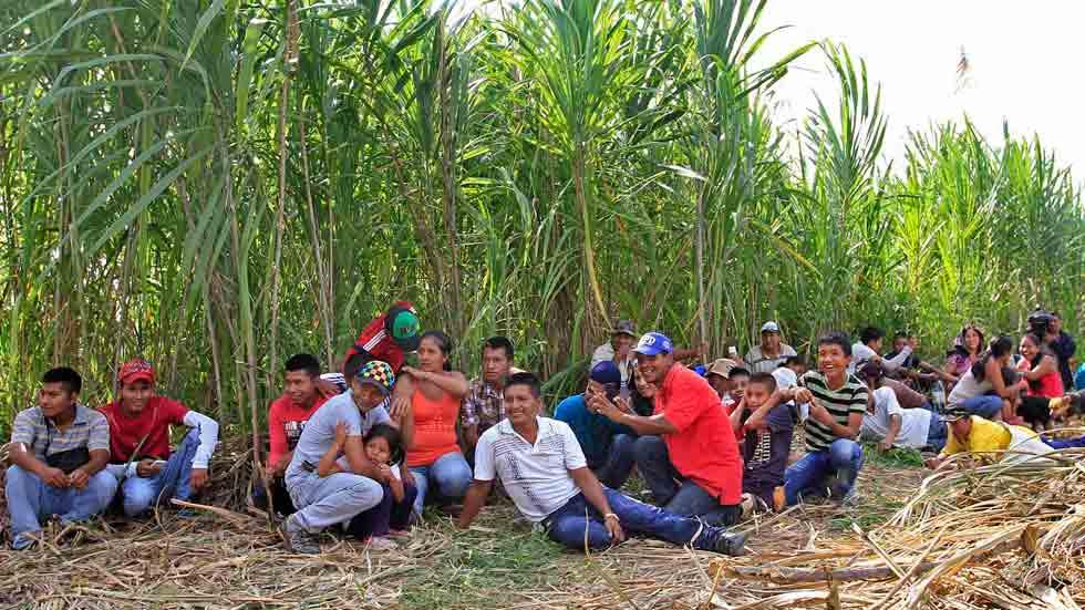 La guerrilla de las FARC ha iniciado una tregua unilateral e indefinida