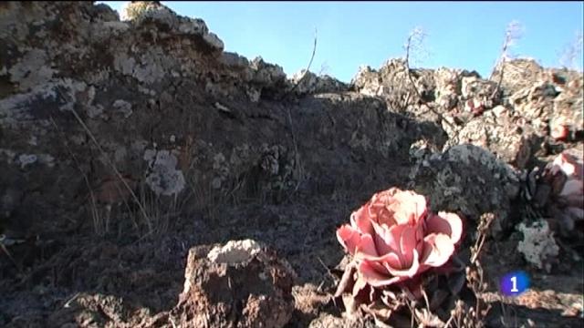 Repor - El Hierro, esperando el volcán