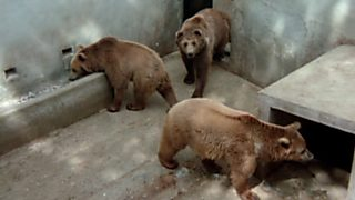 El hombre y la Tierra (Fauna ibérica) - El Hosquillo, osos