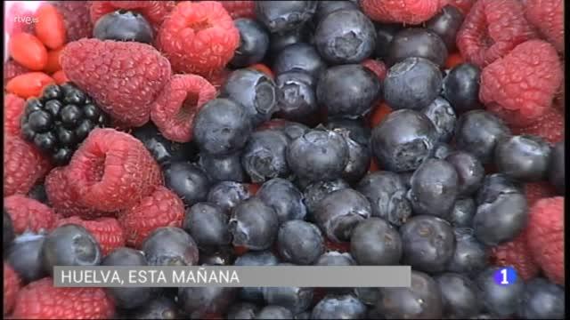 Huelva acoge el 3º Congreso Internacional de Frutos Rojos