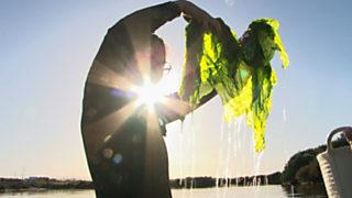 Comando Actualidad - Huertos del mar