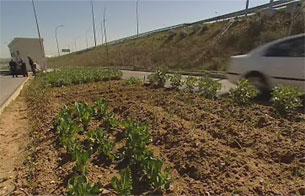 Cada vez más personas se animan a hacerse su propio huerto para tener alimentos más frescos y sin pesticidas