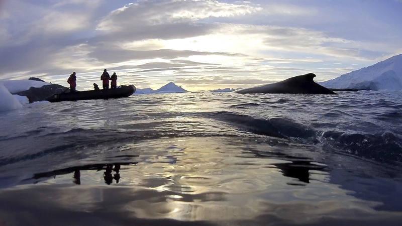 Imagen tomada desde uno de los dispositivos colocados en el lomo de una ballena, en la que se ve a los cientificos australianos.