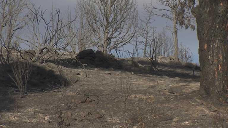 Se busca a los culpables del incendio que quemó más de mil hectáreas en la sierra de Madrid