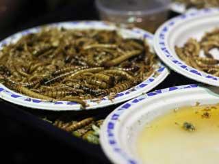 Insectos en la dieta