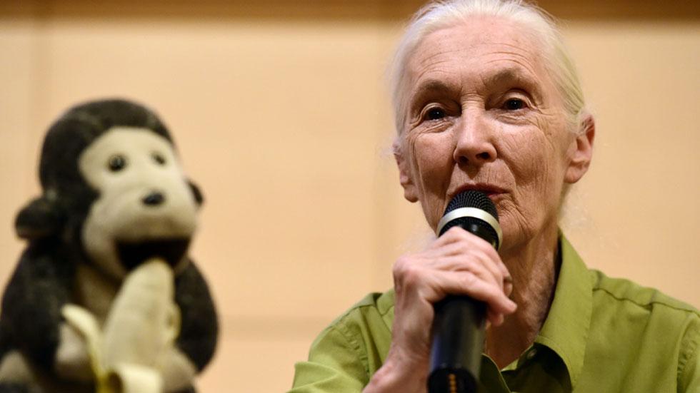 Jane Goodall defiende en Madrid la protección de los animales y el desarrollo sostenible
