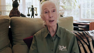 Órbita Laika - Superstars de la ciencia - Jane Goodall