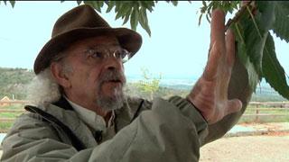 Aquí la Tierra- Juan Plantas y las castañas