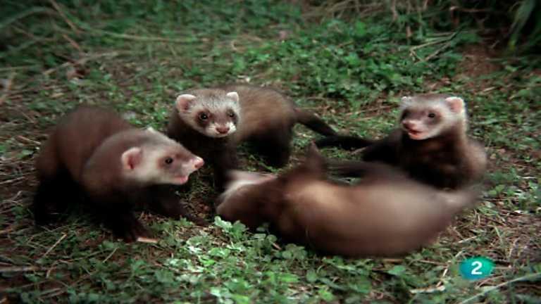 El hombre y la Tierra (Fauna ibérica) - El juego de la caza, 2