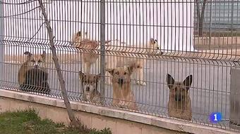 Ir al VideoJuzgan por primera vez en España a un hombre por matar a su perra