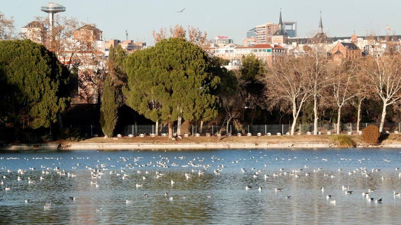 El lago de la Casa de Campo tiene más de ocho hectáreas de extensión y permanecerá en dique seco ocho meses.