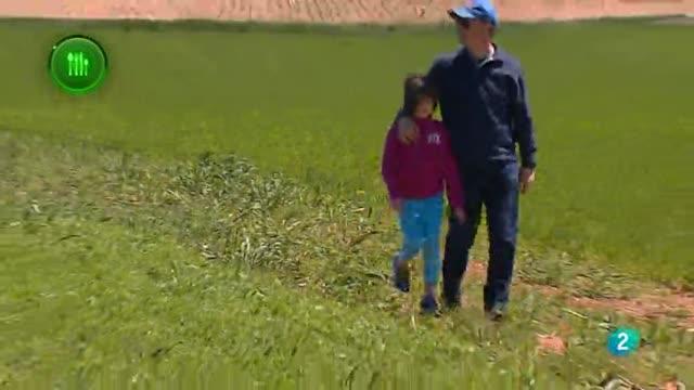 Agrosfera - Con mucho gusto - Legumbres FAO