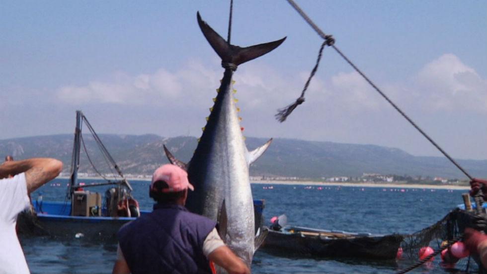 """Aquí la tierra - La """"levantá"""" del atún"""
