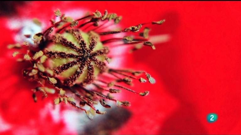 Jara y sedal - Luz y naturaleza